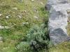 Alpe Pedriola