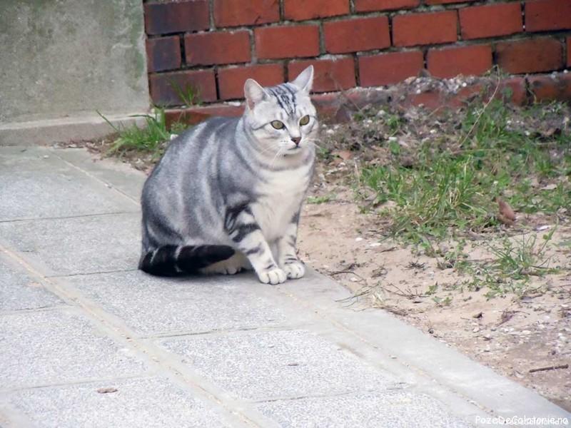 Gatto - Burano